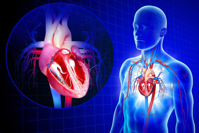 Stress Effects on Cardiovascular Disease